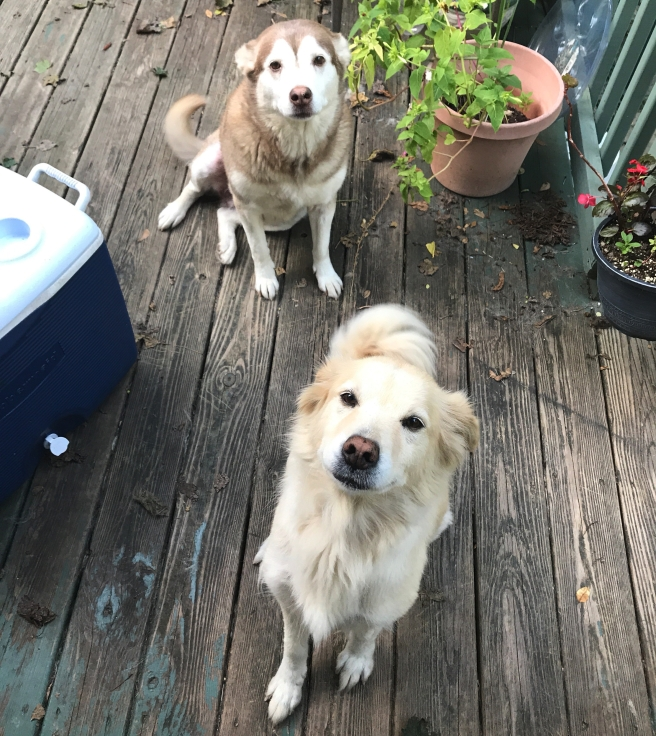 luna and polar sitting on a deck
